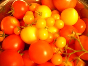 Just Picked Tomatoes